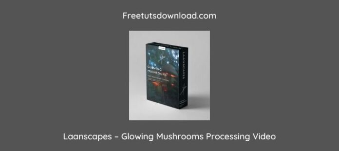 Laanscapes – Glowing Mushrooms Processing Video